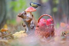 gljiva-vjeverica-sjenica