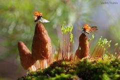 gljive-bubamare