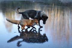 neobična životinjska prijateljstva 2