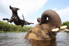 neobična životinjska prijateljstva 11