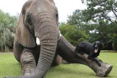 neobična životinjska prijateljstva 12