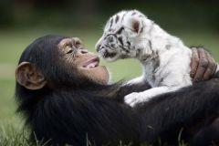 neobična životinjska prijateljstva 13