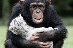neobična životinjska prijateljstva 15