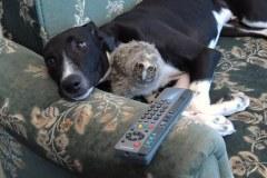 neobična životinjska prijateljstva 17