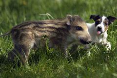 neobična životinjska prijateljstva 18