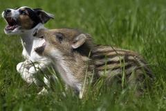 neobična životinjska prijateljstva 19