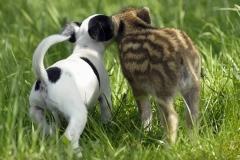 neobična životinjska prijateljstva 20