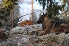 neobična životinjska prijateljstva 3