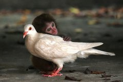 neobična životinjska prijateljstva 21