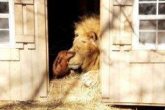neobična životinjska prijateljstva 22