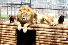 neobična životinjska prijateljstva 24