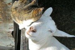 neobična životinjska prijateljstva 25