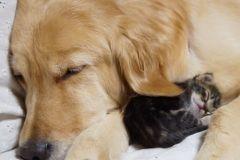 neobična životinjska prijateljstva 26