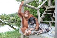 neobična životinjska prijateljstva 30