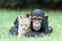 neobična životinjska prijateljstva 32