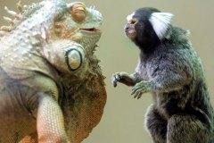 neobična životinjska prijateljstva 34