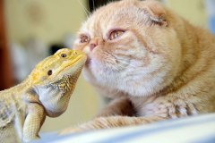 neobična životinjska prijateljstva 36
