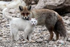 neobična životinjska prijateljstva 5