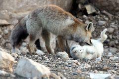 neobična životinjska prijateljstva 6