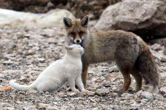 neobična životinjska prijateljstva 7