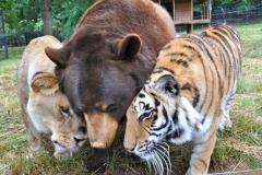 neobična životinjska prijateljstva 9