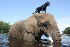 neobična životinjska prijateljstva 10