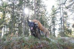 neobična životinjska prijateljstva 1