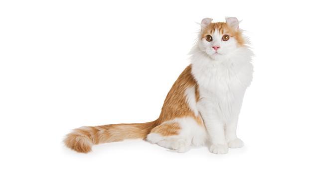 zrela uska maca