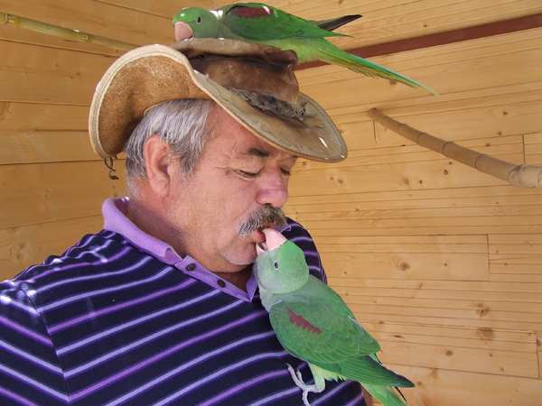 aleksander papagaji