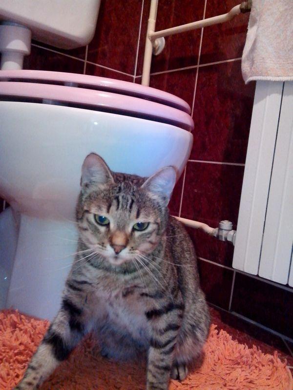 izgubljeni mačak zvonko