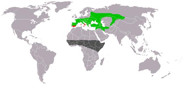 obitavališta (otus scops) ćukova u europi, aziji i africi