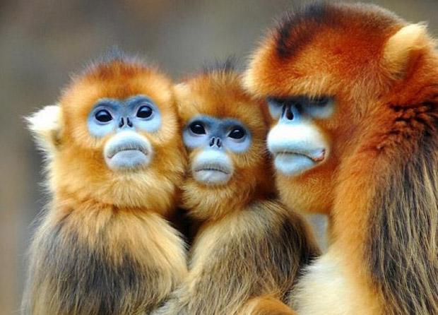 sakati majmuni