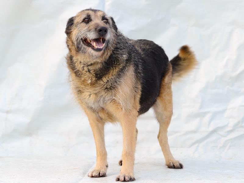Alf - udomljavanje psa
