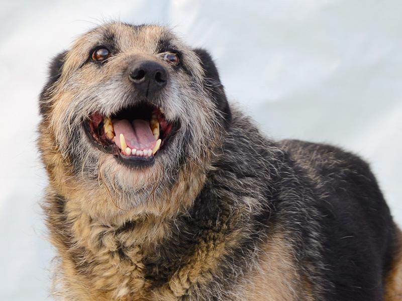 Alf - udomljavanje psa - slika 2