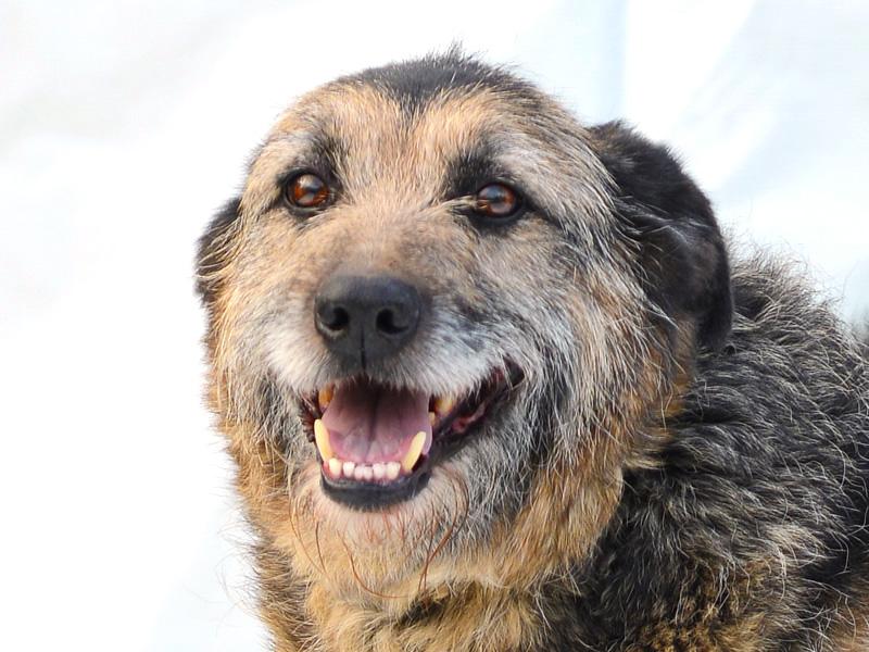 Alf - udomljavanje psa - slika 4