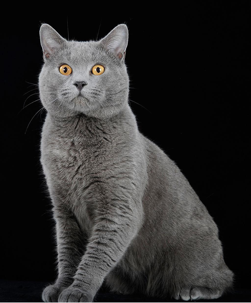 sjajne slike maca vruća teen seksi fotografija