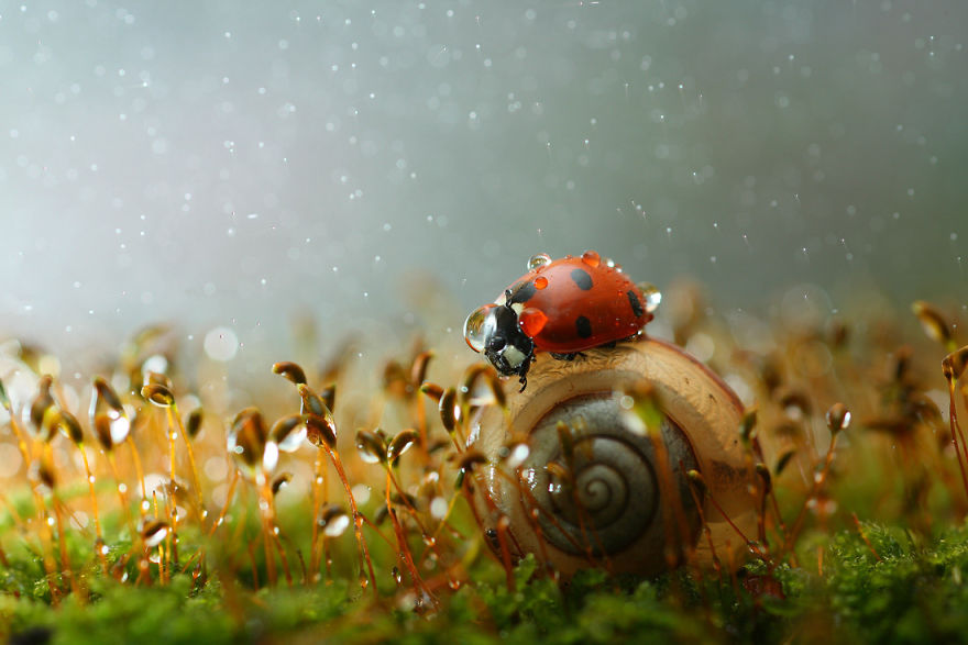 životinjski makro svijet