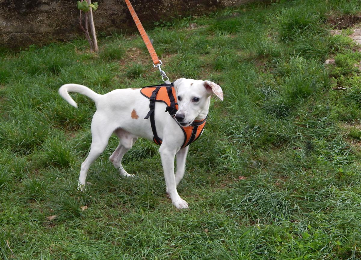 Pas Fido traži dom - udomljavanje životinja