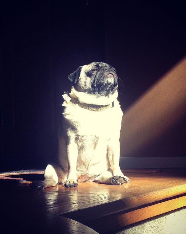 pas na sunčevim zrakama