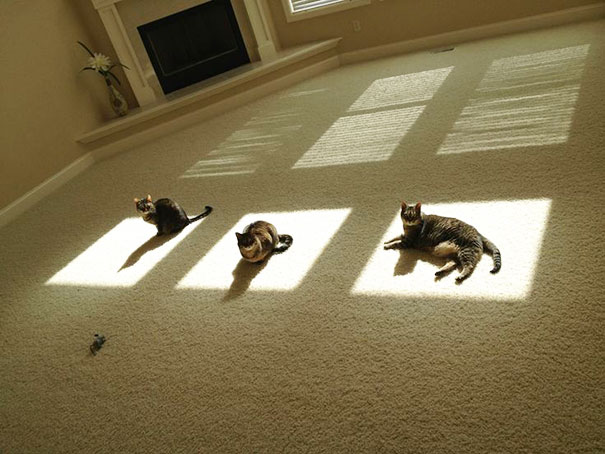 mačke na suncu