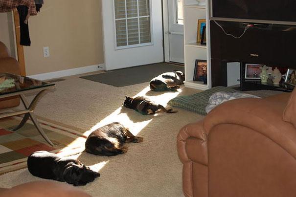 životinje spavaju