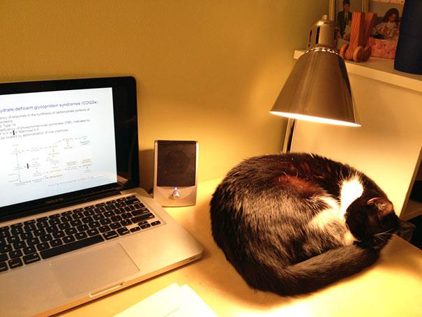 mačka spava ispod lampe