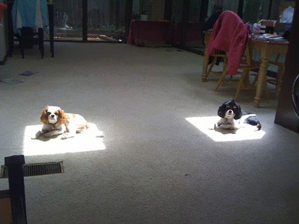 psi na suncu
