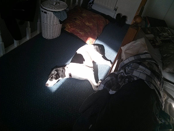 pas spava na suncu