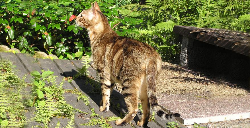 Fotografije debelih maca
