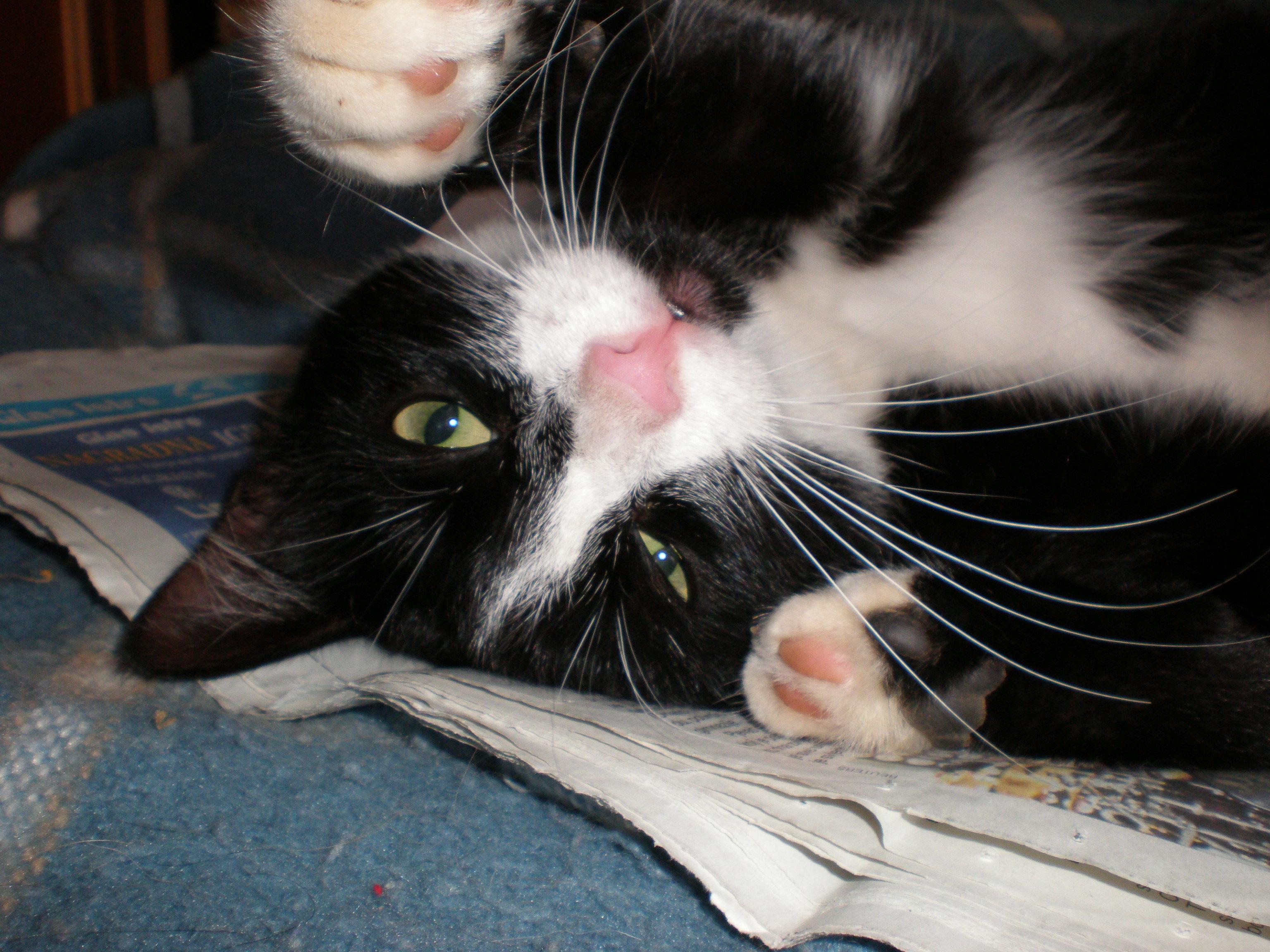 Pomozimo umiljatoj mački Zvončici