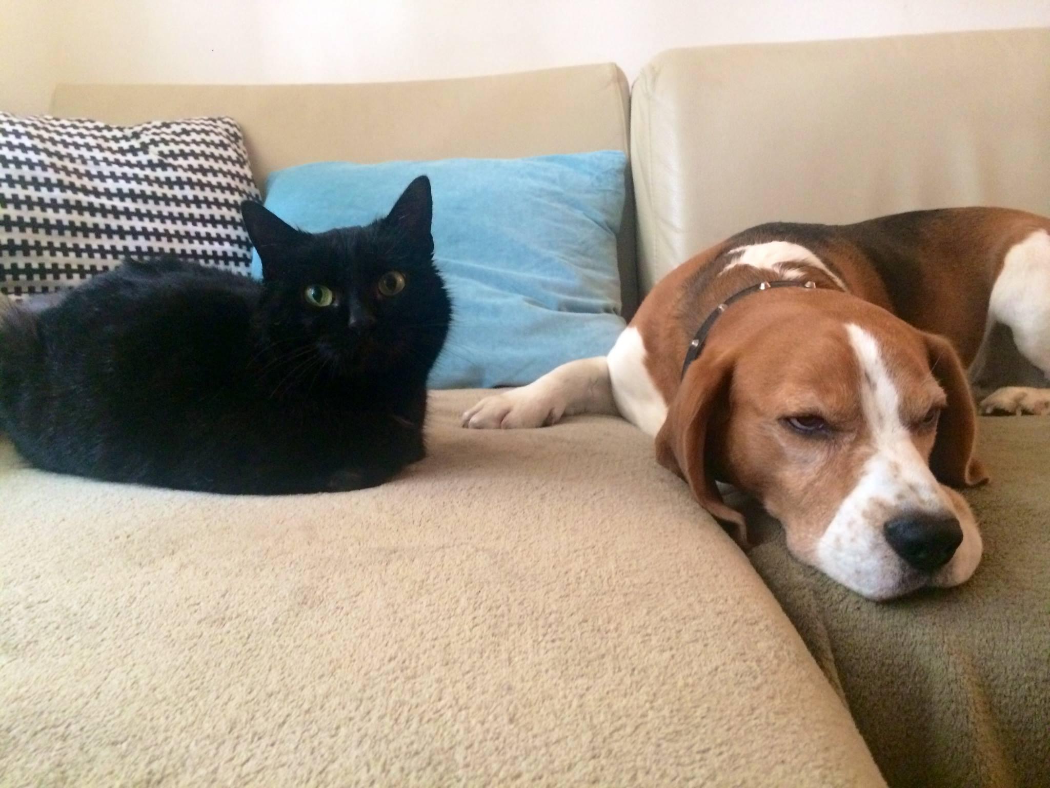 Mačke za udomljavanje