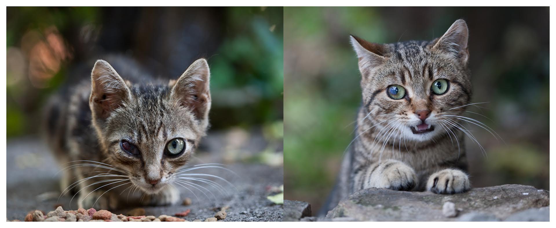 mačak micek